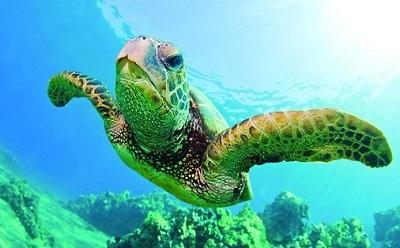 Turtle Canyon Snorkel Hawaii